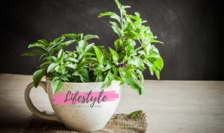 Tulsi (Holy Basil): Types, Benefits & Facts